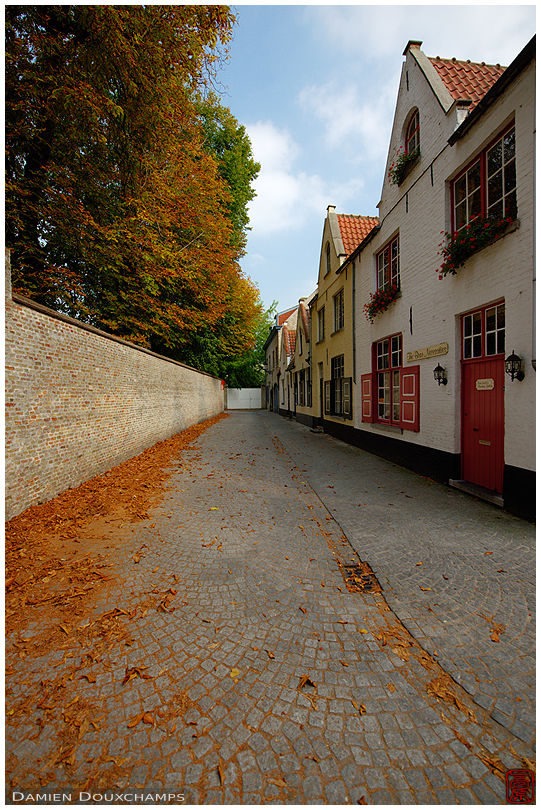 Old alley with autumn leaves