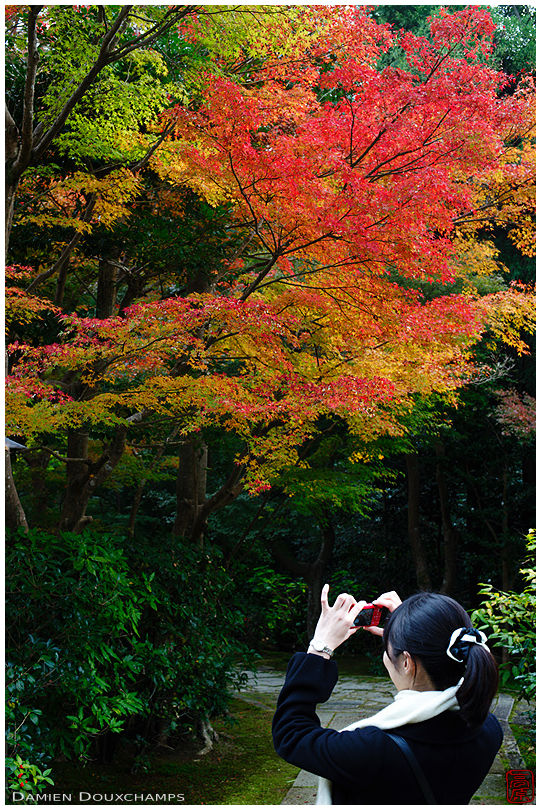 Woman photographing autumn colours, Sokuso-in temple