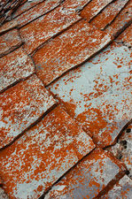 Lichen colonizing the tiled roof of an old chalet