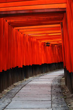 Path under torii in Fushimi Inari shrine (伏見稲荷大社)