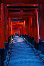 Evening walk under torii (Fushimi Inari shrine 伏見稲荷大社)