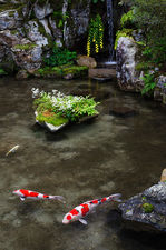 Pond with waterfall and carps, Jikko-in (実光院)