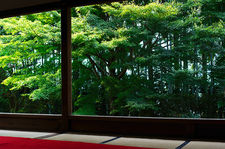Bamboo forest and maple trees from meditation hall, Hosen-in (宝泉院)