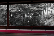 Bamboo forest from meditation hall, Hosen-in (宝泉院)
