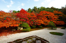 Zen garden in autumn (Tenja-an 天授庵)