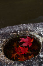 Water basin with faller maple leaves (Shisendo 詩仙堂)
