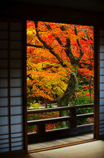 Maple trees from temple hall (Hokyo-in 宝筺院)