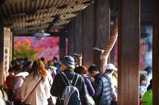 Crowd visiting Kiyomizu-dera in autumn (清水寺)
