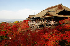 Main terrace overlooking red maple tree forest (Kiyomizu-dera 清水寺)