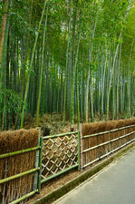 Gate to an exploited bamboo forest