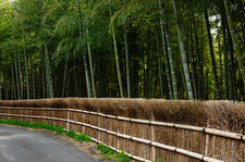 Road in bamboo forest