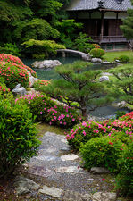 Rhododendrons in bloom, Shoren-in temple gardens