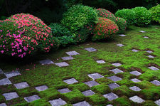 Moss garden with rhododendrons in bloom, Tofuku-ji temple