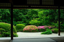 Lush vegetation and blooming rhododendrons from meditation hall, Shisen-do temple