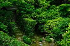 Lush vegetation in Keishun-in zen garden