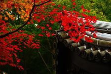 Autumn colours in Enko-ji temple