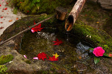 Tsukubai water basin with red maple leaves and pink flower, Hosen-in temple
