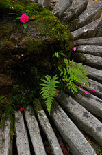 Ferns and stone arrangement at the foot of a tsukubai water basin in Hosen-in temple