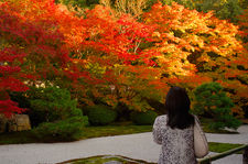 Watching fiery autumn colors in Tenju-an temple