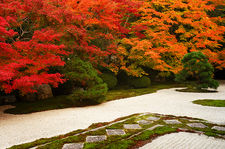 Autumn colours in rock and moss zen garden, Tenju-an temple