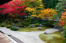 Bright autumn colours in zen garden, Senyu-ji temple