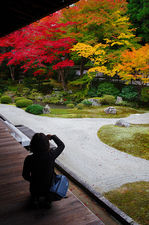 Tourist photographing Senyu-ji temple zen garden in autumn