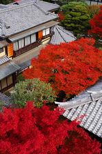 Red maple trees in Daiun-in temple
