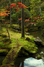 Moss-covered bridge in the garden of Saiho-ji temple, a UNESCO World Heritage site of Kyoto, Japan