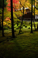 Moss-covered grounds in the garden of Saiho-ji temple, a UNESCO World Heritage site of Kyoto, Japan