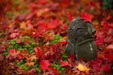 Little jizo statue among moss and fallen maple leaves, Enko-ji temple, Kyoto