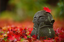 Little jizo statue among fallen maple leaves, Enko-ji temple, Kyoto