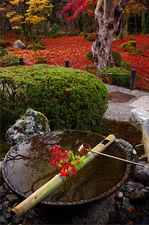 Tsukubai water basin with autumn decoration, Enko-ji temple, Kyoto
