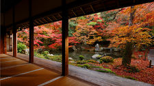 Late autumn in Renge-ji temple pond garden, Kyoto