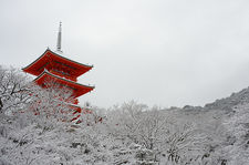 Kiyomizu-dera temple's pagoda hiding behind snow-covered trees, Kyoto, Japan