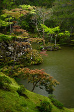 Rainy day in the moss garden of Saiho-ji temple, a UNESCO World Heritage site of Kyoto, Japan
