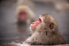 Jigokudani Snow Monkeys (地獄谷野猿公苑)